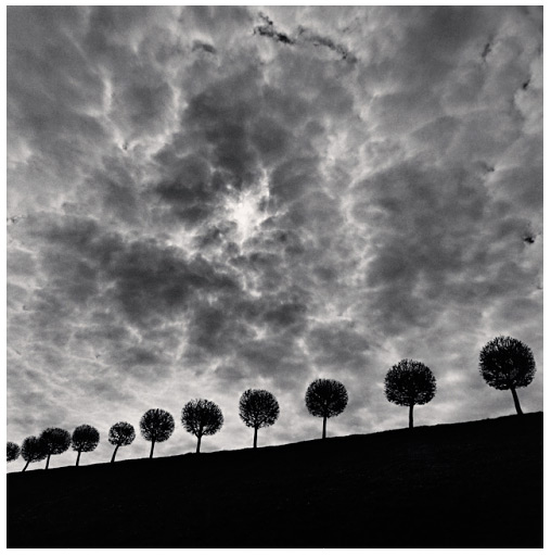 10 1/2 Trees Russia Michael Kenna